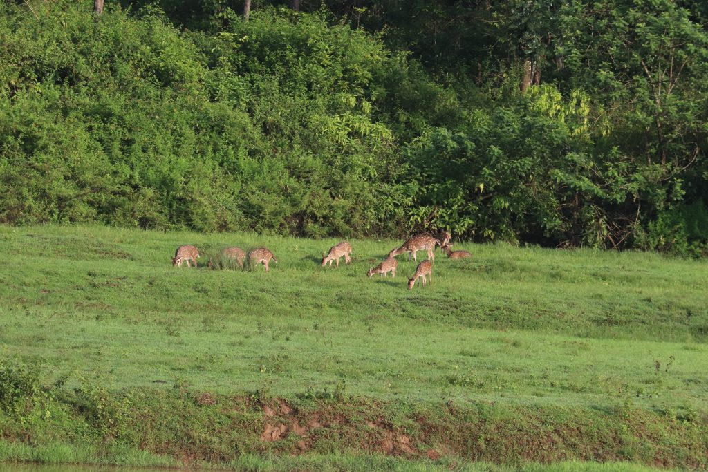 sightseeing and stay in wayanad