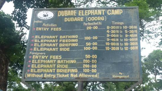 Dubare elephant entrance timing and fee