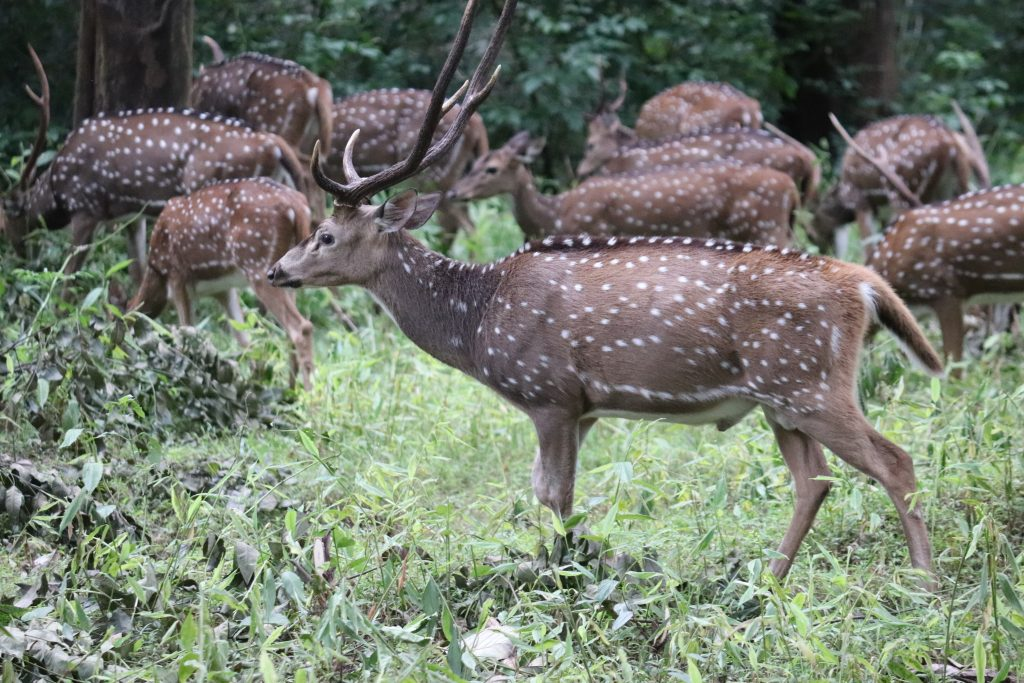 Thirunelli Wildlife Sanctuary images