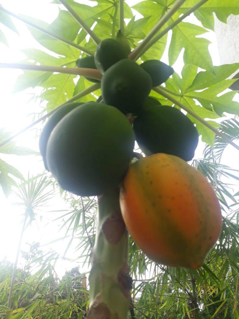 my home garden - blogger